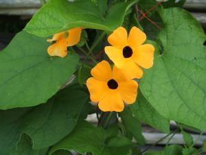 ふれあい花壇2013-08-27-033