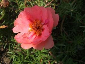 ふれあい花壇2013-08-27-036