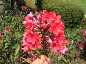 ふれあい花壇2013-08-27-048