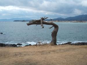 岩井崎-龍の松2014-01-27-055