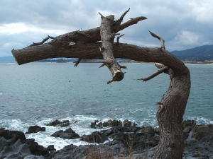 岩井崎-龍の松2014-01-27-057
