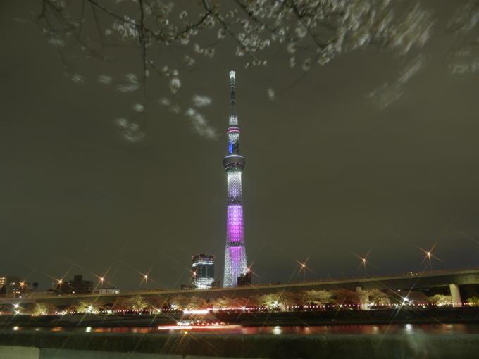東京スカイツリー-桜02