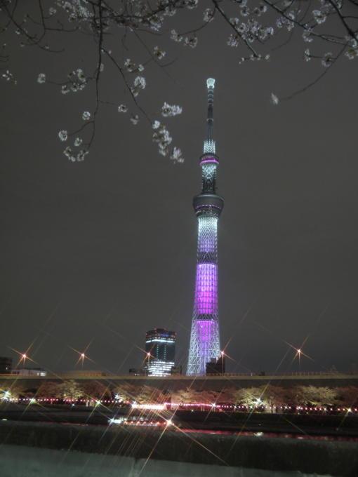 東京スカイツリー-桜03