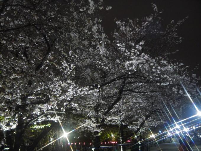 東京スカイツリー-桜05