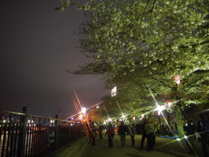 東京スカイツリー-桜06