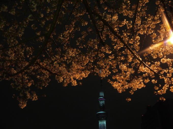東京スカイツリー-桜10
