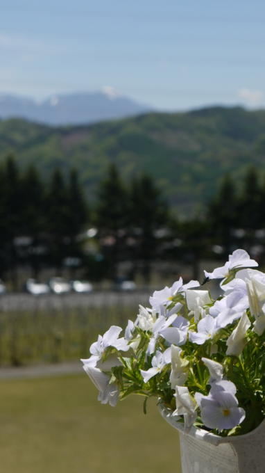 あさまの森201305-ワイナリー09