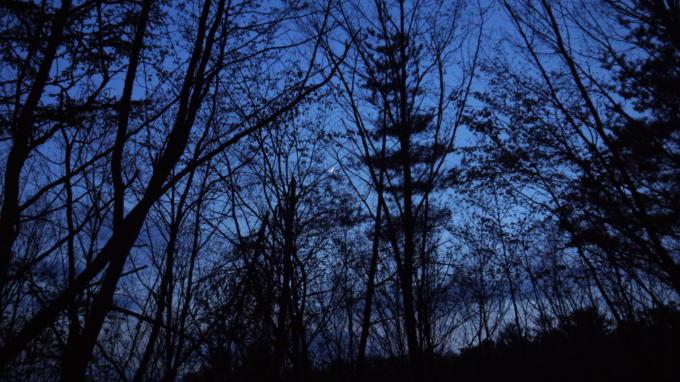 あさまの森20130513-月01