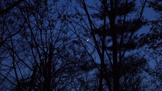 あさまの森20130513-月02