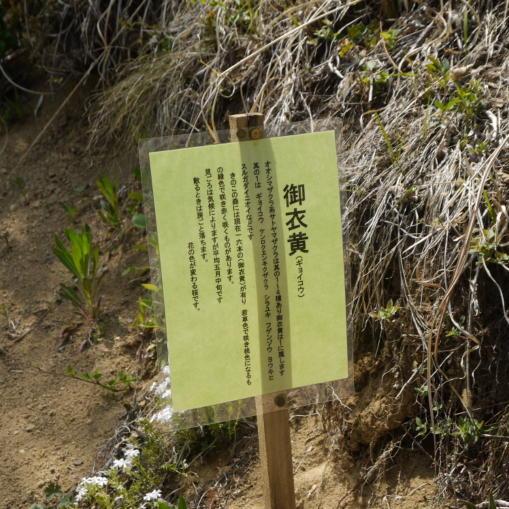 あさまの森20130514-ふわりや16