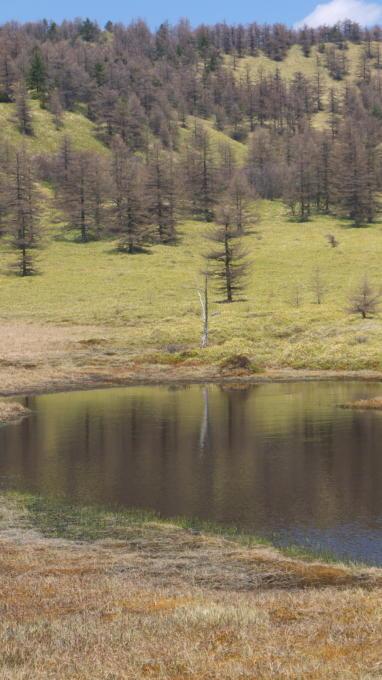 池の平湿原20130515-26