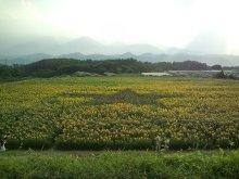 ~椎名町情報ブログ~-ひまわり畑-星型
