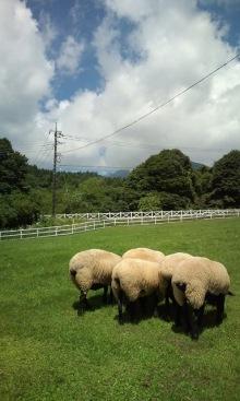 ~椎名町情報ブログ~-まきば公園-羊