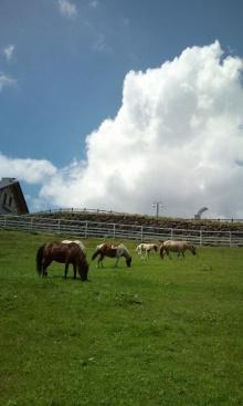 ~椎名町情報ブログ~-まきば公園-馬