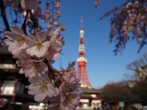 桜と東京タワーc
