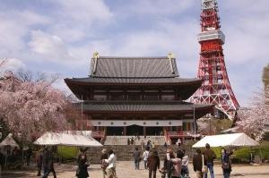 増上寺桜434