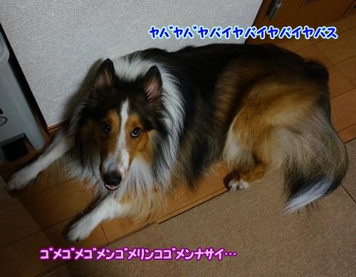 1-DSC00835.jpg