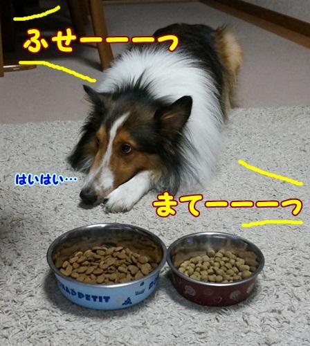 1-DSC00853.jpg