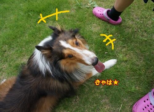 1-DSC00901.jpg