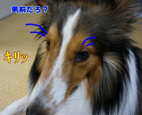 DSC00390a.jpg