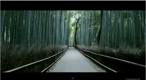 bambooforest.png