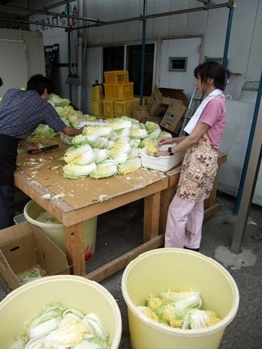 2013.6.15 さくらんぼ狩り(キムチ工場) 036