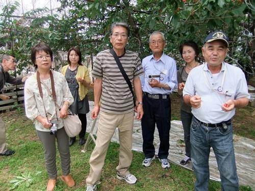 2013.6.15 さくらんぼ狩り(さくらんぼ園) 020 (4)