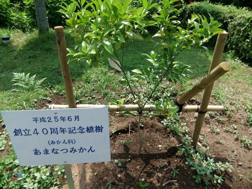 2013.7.27 サマーキャンプ(鎌足小) 074