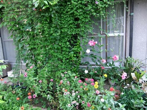 2013.8.28 庭の花たち 031 (3)