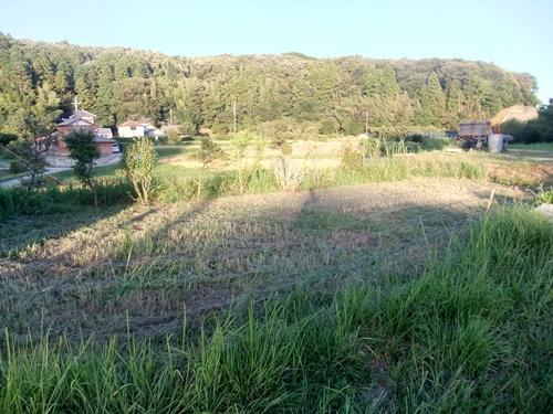 2013.9.1 果樹園の草刈 011