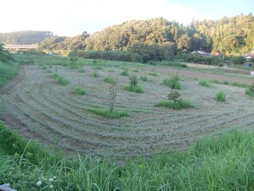 2013.9.1 果樹園の草刈 010