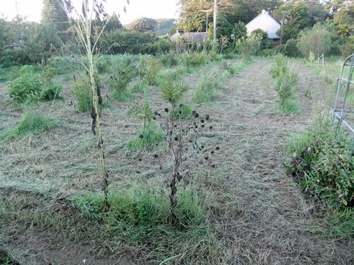 2013.9.1 果樹園の草刈 008