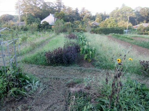 2013.9.1 果樹園の草刈 007