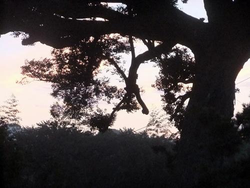 2013.9.10 朝焼け(自宅2階) 035