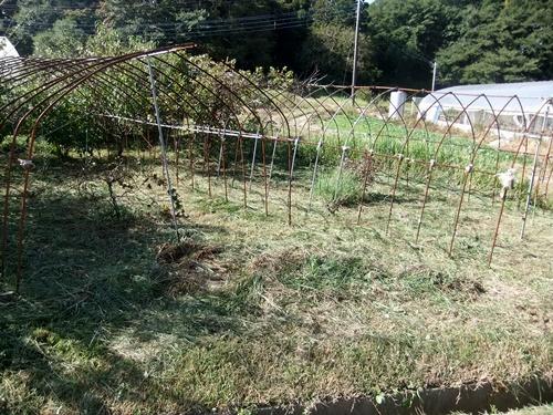 2013.9.28 果樹園の草刈(育苗ハウス横) 005 (3)