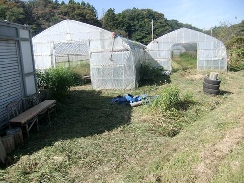 2013.9.28 果樹園の草刈(育苗ハウス横) 005 (1)
