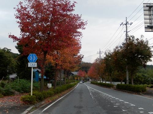 2013.11.4 並木の紅葉(台湾楓) 018 (2)
