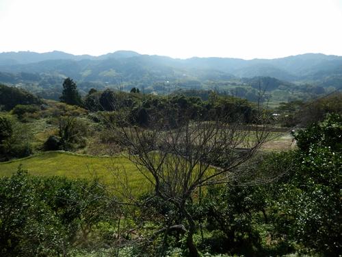 2013.11.5 野山歩き下見会(大山千枚田方面) 022
