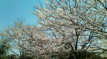 kakuさんのブログ-20090409125315.jpg