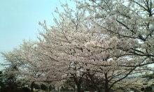 kakuさんのブログ-20100419121731.jpg