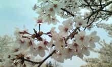 kakuさんのブログ-20100419121904.jpg