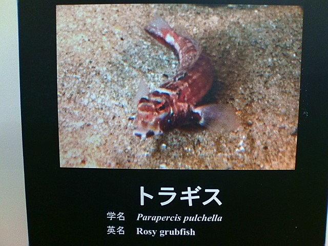 kakuさんのブログ-20110804120711.jpg