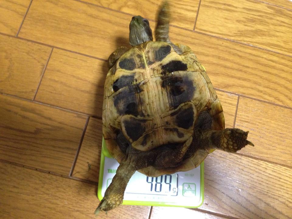 kamejiro20131013a.jpg