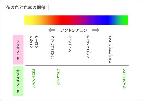 flower_chart02.jpg