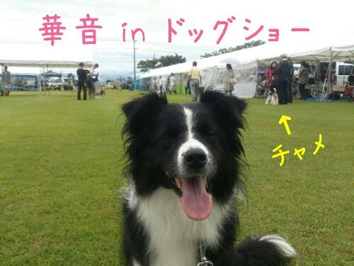 fc2_2013-09-15_23-45-33-724.jpg