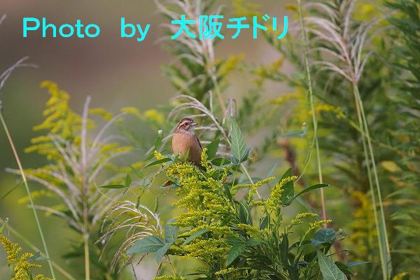 IMG_5902-1.jpg