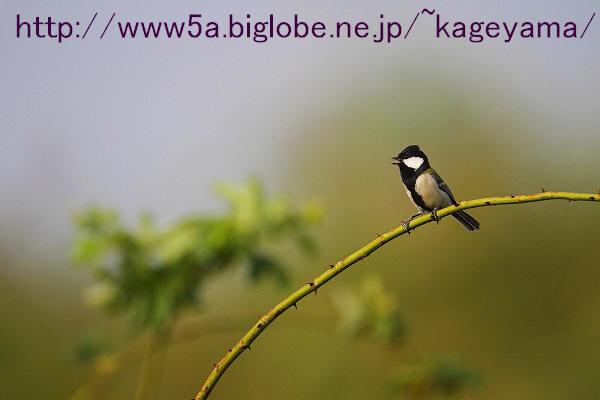 IMG_6096-1.jpg