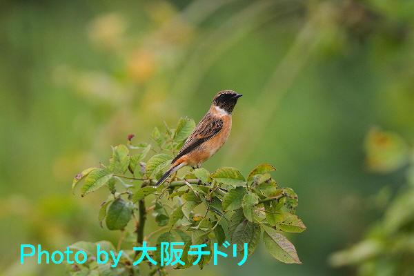 IMG_6733-1.jpg
