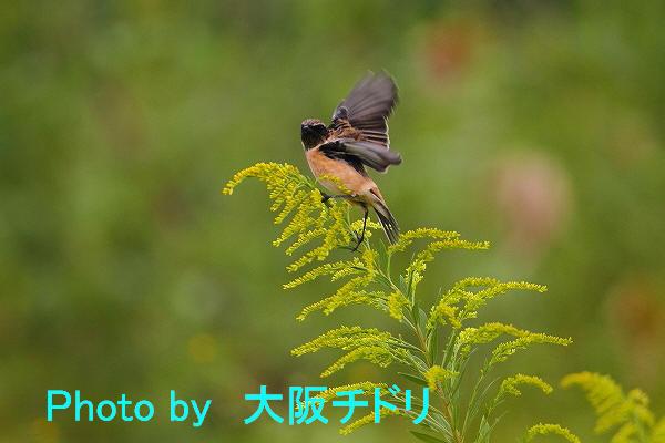IMG_7075-1.jpg