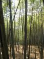 林昌寺 境内の竹林